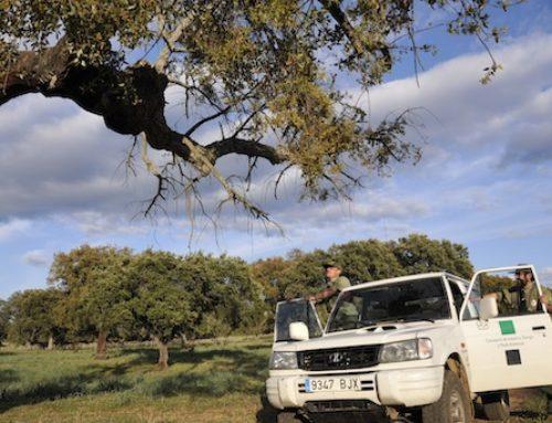 Los árboles no contribuyen a la prevención del cambio climático