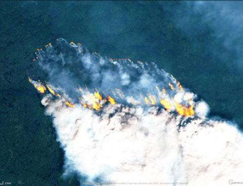 Arden los bosques del Ártico en una ola de calor como nunca han conocido