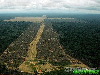 amazonia-cultivo-soja