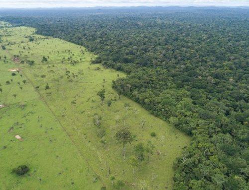 Tras la deforestación llegan los incendios en la selva amazónica