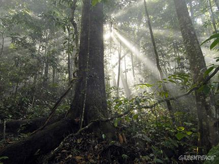 amazonia-greenpeace