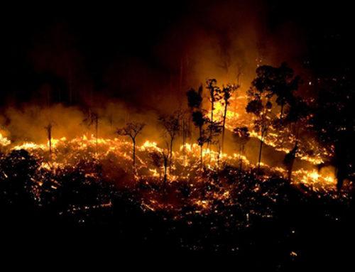 Incendios en la Amazonía: una historia común con otras partes del mundo