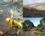 asemfo, obras forestales