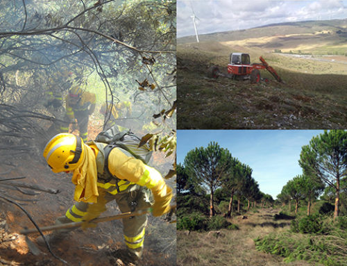 Qué es ASEMFO y su relación con los incendios forestales