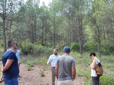pino carrasco, boscat, Avinyó