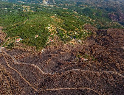 Ayudas a la biomasa en Portugal para prevenir incendios