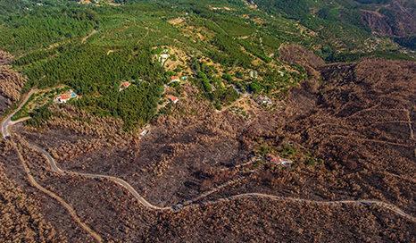 biomasa-Portugal-bioenergía