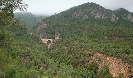 bosque-mediterráneo-murcia
