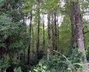 bosque-nativo-chileno