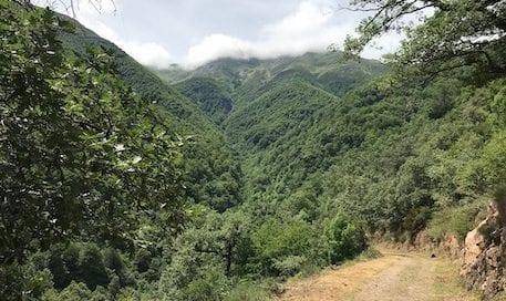 bosques-salud-dia-internacional-bosques-osbo