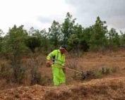 brigadas-forestales-desempleo-castilla-León