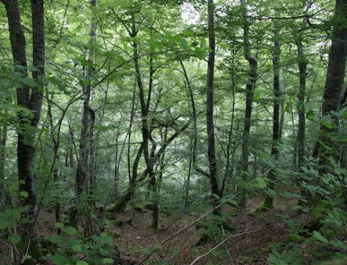 Cantabria paraliza las mejoras en los Montes de Utilidad Pública