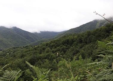 cantabria-bosques