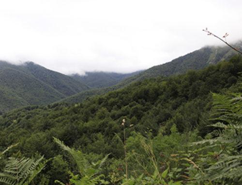 Desarrollo rural, gestión forestal y fuego: retos y experiencias