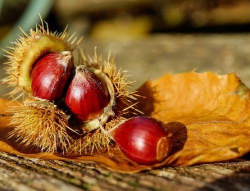 Publicadas las ayudas para los Grupos Operativos forestales extremeños
