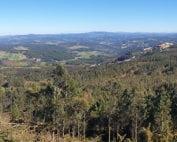 Dia-internacional-bosques-boqueixon-forestales
