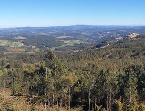 Los bosques son vitales para España