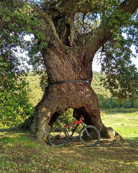 encino-tres-patas-bicicleta