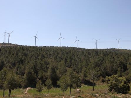 enguera-gestion-forestal-comunidad-valenciana-ayudas-osbo
