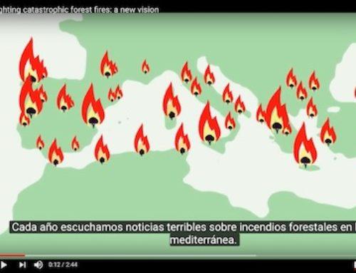 Los incendios forestales: una preocupación en la Unión Europea
