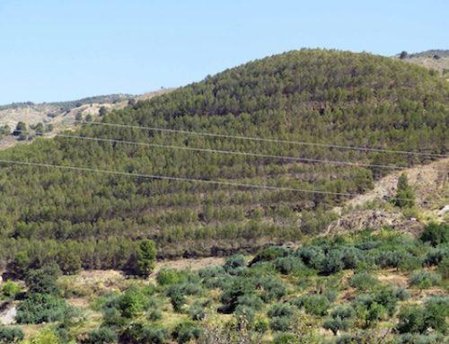 El cambio climático hace más frágiles a los bosques españoles