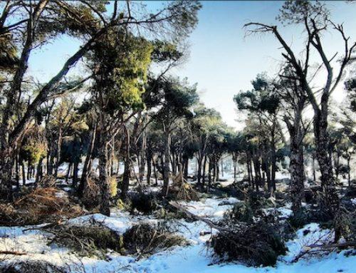 Filomena puede convertir los bosques en un polvorín