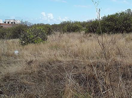 fincas-agricolas-abandonadas-gran-canaria-osbo