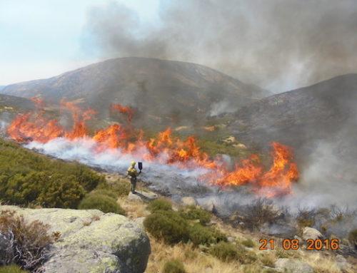 El fuego forestal: fenómeno natural y factor ecológico