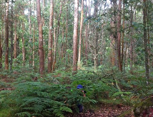 Galicia espera aumentar 200.000 ha su superficie forestal ordenada