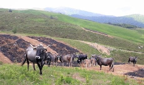 ganaderia-extensiva-incendios-cifa-matorralizacion-osbo