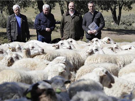 ganaderia-preventiva-ovejas-Comunidad-Madrid