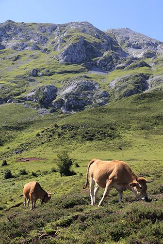 ganado-pastando-Asturias