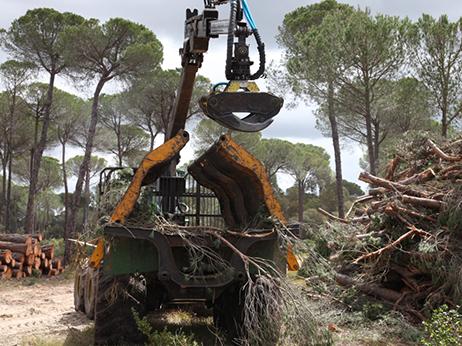 gestion-forestal-cargador