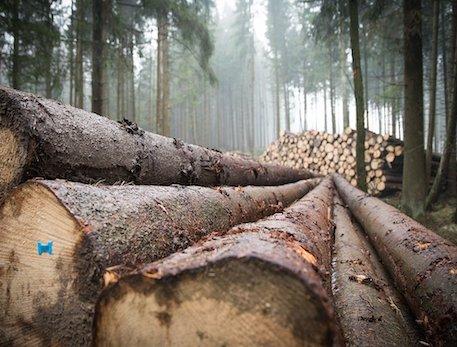gestion-forestal-secf-osbo