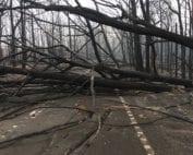 incendio-australia-bosque-arrasado