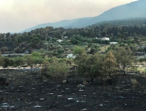 Ha comenzado la recuperación del incendio de Cadalso y Cenicientos