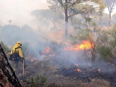 incendio-hoyo-pinares-2019-brif-puerto