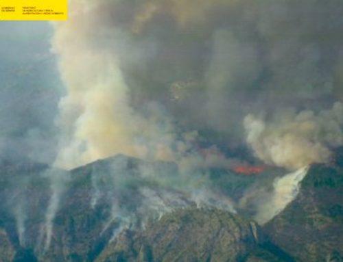 """933.942 € para la restauración """"agroforestal"""" del incendio de Llutxent"""