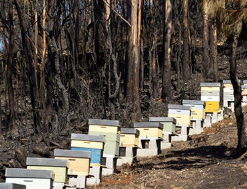 WWF alerta sobre megaincendios, cambio climático y falta de gestión