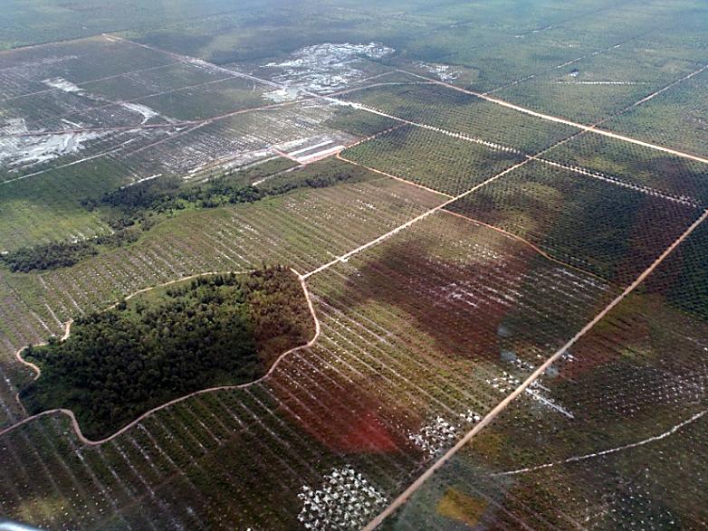 Indonesia-plantacion-palma-isla-vegetación