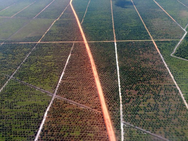 indonesia-plantacion-palma