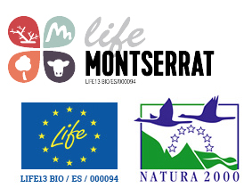 life-monserrat-logo