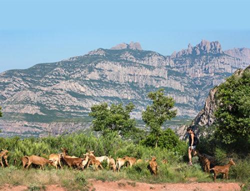 Life Monserrat: gestión forestal y ganadera para prevenir incendios