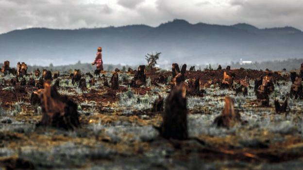 madagascar-deforestacion