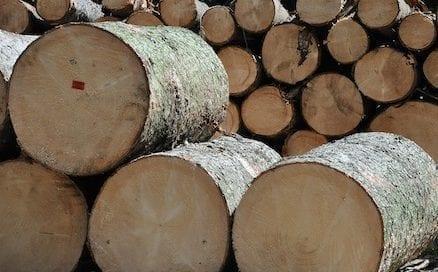 madera-cortada-paque-osbo