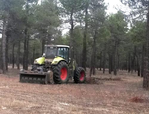 La planificación territorial y la gestión forestal son la clave