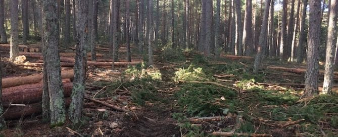 La ordenación forestal es la planificación en el espacio y el tiempo de las actuaciones a desarrollar sobre un monte, o un grupo de montes, para aprovechar sus recursos bajo los principios de la gestión forestal sostenible, teniendo en consideración todas las funciones que presta el monte