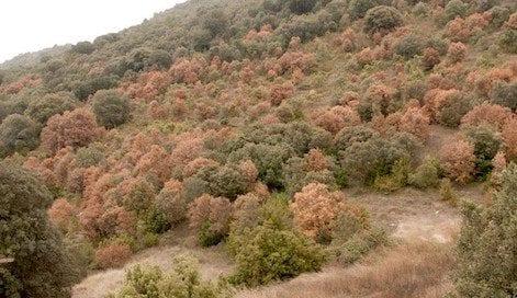 Montsec-seca-encinas-osbo