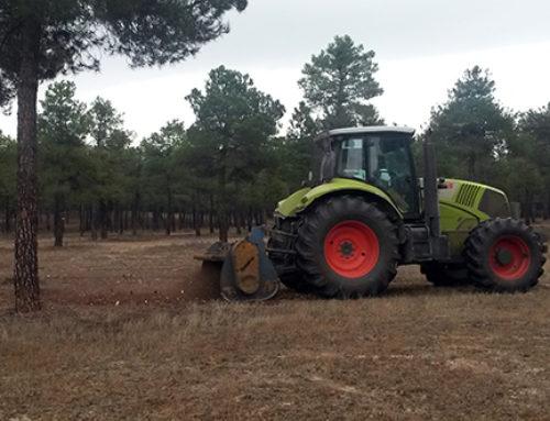 Ayudas que asfixian al sector forestal