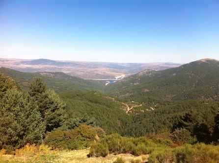pinos-jovenes-valle-iruela